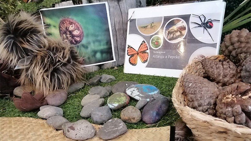 Conservation Week displays at Lollipops Papamoa Daycare